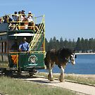 Victor Harbor Horse-drawn Tram, South Australia by BronReid