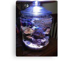 My coral reef in a cookie jar Canvas Print