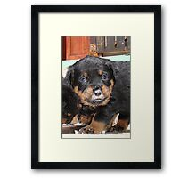 "Pet ....""You've Got Food on Yer Face"" Framed Print"