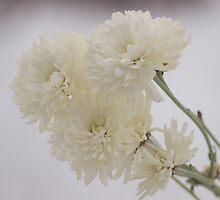 White on White by Melzo318