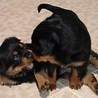 """Rough and Tumble"" Rottweiler Puppies by taiche"