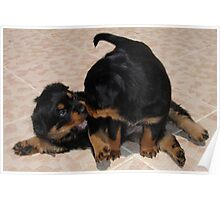 """""""Rough and Tumble"""" Rottweiler Puppies Poster"""