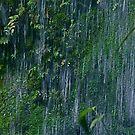 Huaorani Boy by tomcelroy