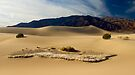 Morning on Stovepipe Wells Dunes by Zane Paxton