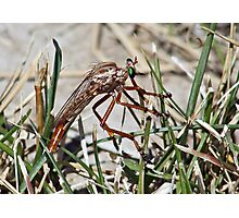 Big Ugly Bug with Pretty Green Eyes Photographic Print