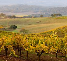 Sonoma County Vinyard-2 by Zane Paxton