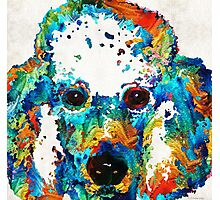 Colorful Poodle Dog Art by Sharon Cummings Photographic Print