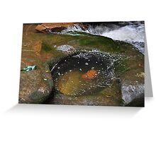 sidetracked Waitui Creek, Mid North Coast Aust Greeting Card