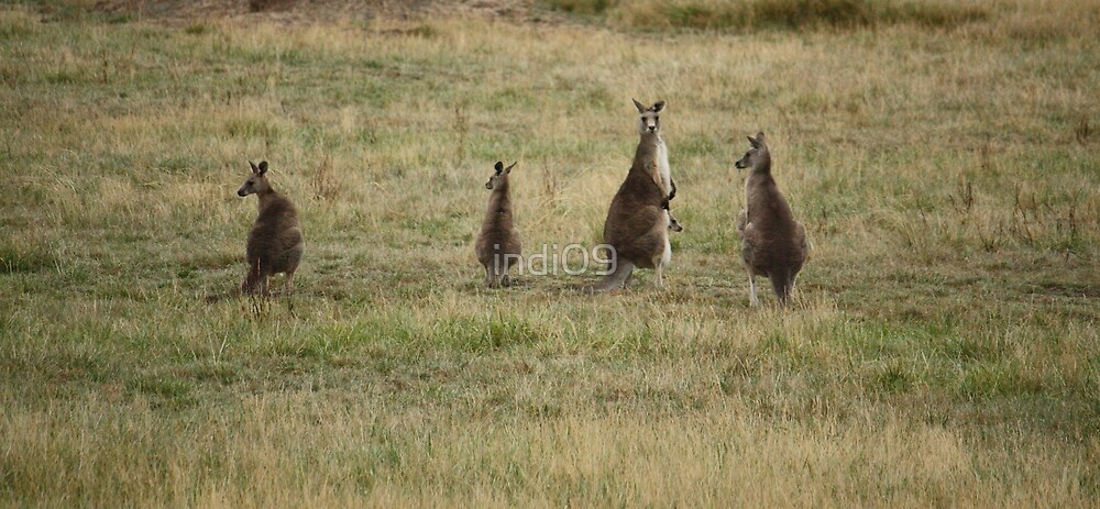 Family of Kangaroos by indi09