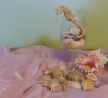 An Assortment of My Favourite Shells, and a Seahorse. by Mywildscapepics