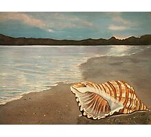 Seashell  Photographic Print