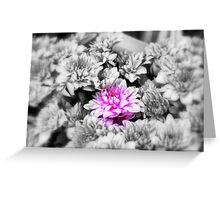 Focal Black and White. Greeting Card