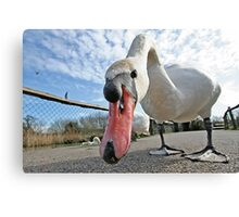 Are You Looking At Me - 2 Canvas Print