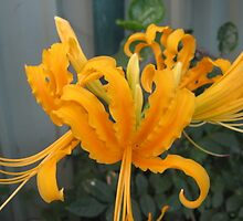 Lycoris Yellow Lily. by Mywildscapepics