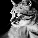 Cat Waiting The Right Moment by Marc Garrido Clotet