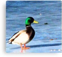 DUCK 6 Canvas Print