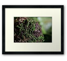 Moss ball Framed Print
