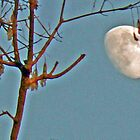 hanging moon by doreen connors
