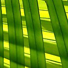 natural pattern by dominiquelandau