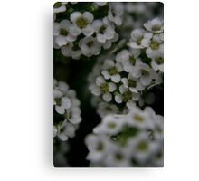 tiny bloom Canvas Print