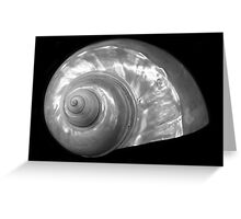 Shell A, Spirals Series Greeting Card