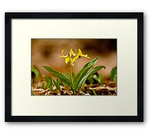 Dogs Tooth Lily - Erythronium Framed Print