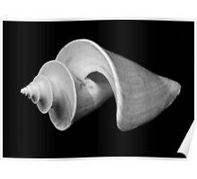 Shell C, Spirals Series Poster