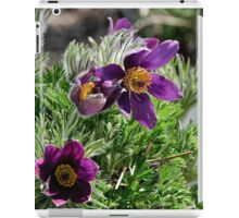 Pasque Flower - Pulsatilla vulgaris iPad Case/Skin