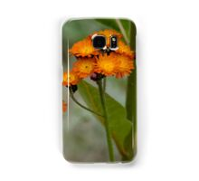 Orange Hawkweed Samsung Galaxy Case/Skin