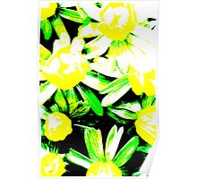 Winter Aconites - Bright Poster