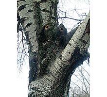 Unusual tree Photographic Print