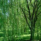 Under the Old Willow Tree- collaboration by ctheworld