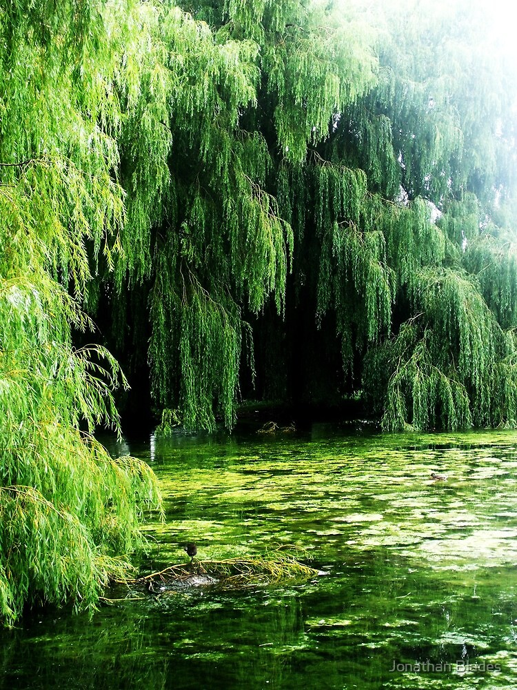 willow by Jonathan Blades