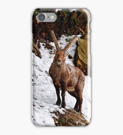 Ibex in Winter iPhone Case/Skin