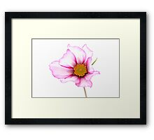 Brightly lit Framed Print