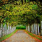 tree-lined walk 2 by Uwe Rothuysen