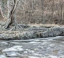 Twisted Tree Along the River Bend by April Koehler