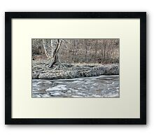Twisted Tree Along the River Bend Framed Print
