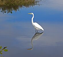 Great Egret by gcampbell