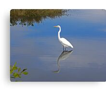 Great Egret Canvas Print