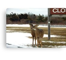 Pssst...hey listen up...the good food is across the road! Canvas Print