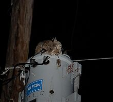 Fried Bobcat 2 by rodcclawson
