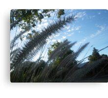 Natures grass in my neighbourhood, South Australia Canvas Print