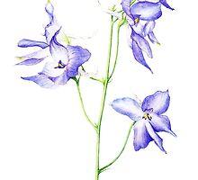 Delphinium Flowers by Ramona Frederickson