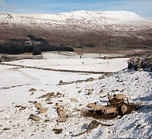 Whernside - Yorkshire's Highest Peak by SteveMG