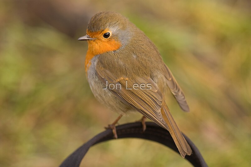 Robin sitting on my bag by jon lees redbubble for Home decor newtownards