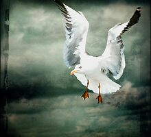 Seagull from heaven .. by Bert Raaphorst