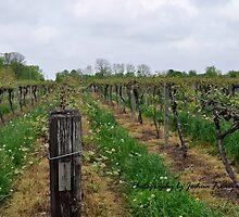 buchanan grapevines by Joshua Fronczak