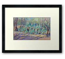 Grass Trees at Cunningham's  Gap Queensland Framed Print