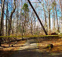 TSI:  Tree Scene Investigation by Jonathan  Green